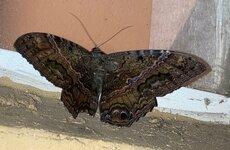 moth-pic-2.jpg